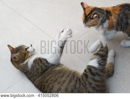 Two Tabby, Mixed Breed Cats Playing Fight On The Floor.