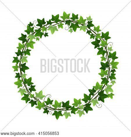 Green Ivy Creeper Plant Wreath Isolated On White Background. Hedera Vine Botanical Round Frame Desig