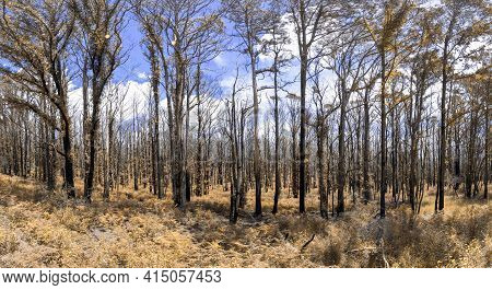 Forest Recovering From Bushfire In Kanangra-boyd National Park In The Central Tablelands In Regional