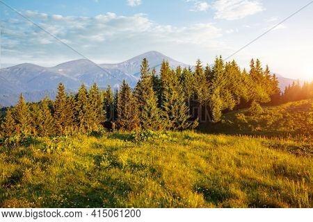 Picturesque summer scene of green mountains on a sunny day. Location place Carpathian mountains, Ukraine, Europe. Vibrant photo wallpaper. Wild protected area. Explore the beauty of earth.