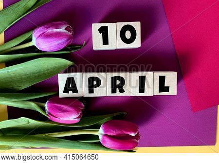 April 10 On Wooden Cubes .tulips On A Purple Background .spring.calendar For April.