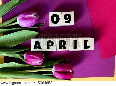 April 9 On Wooden Cubes .tulips On A Purple Background .spring.calendar For April.