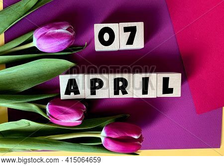April 7 On Wooden Cubes .tulips On A Purple Background .spring.calendar For April.