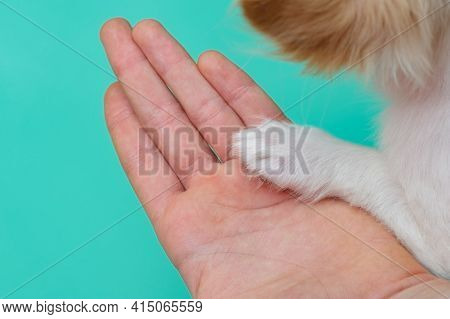 Concept Of Trust And Friendship Between Pet Owner And Dog. Macro Shot. Puppy Paw And Human Palm