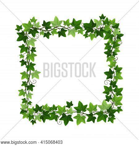 Green Ivy Creeper Plant Square Wreath Isolated On White Background. Hedera Vine Botanical Frame Desi