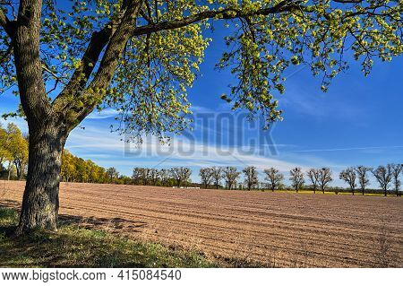 Rural Landscape With A Blooming Tree And Farmland During Spring In Poland