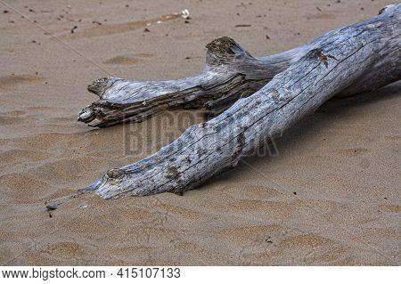 Large Log Of Drift Wood Washed Up On Beach