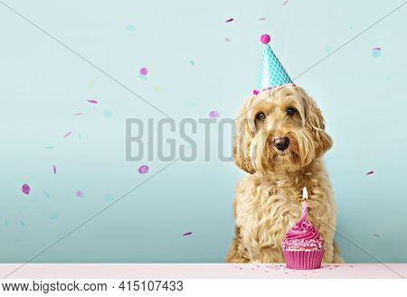 Dog and birthday cake with one candle and falling confetti