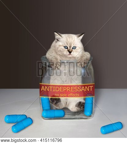 A Kitten Is Inside A Medical Glass Jar With A Inscription Antidepressant. There Are Some Blue Pills