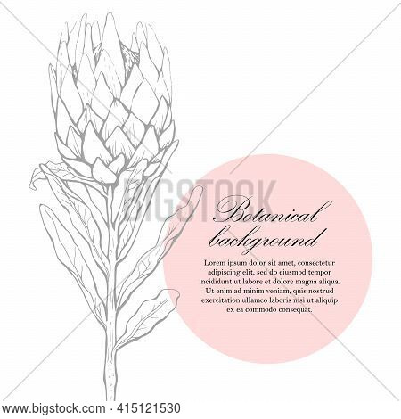 Natural Background. Organic Botanical Design Template. Hand Drawn Vector Illustration Of Protea. Flo