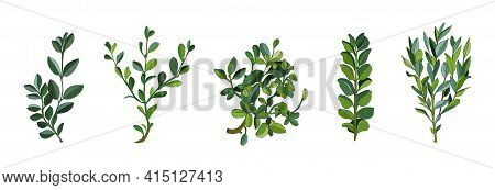Set Leaves And Branches Greenery Elements Of Ficus In Various Form. Modern Collection Of Small Bushe