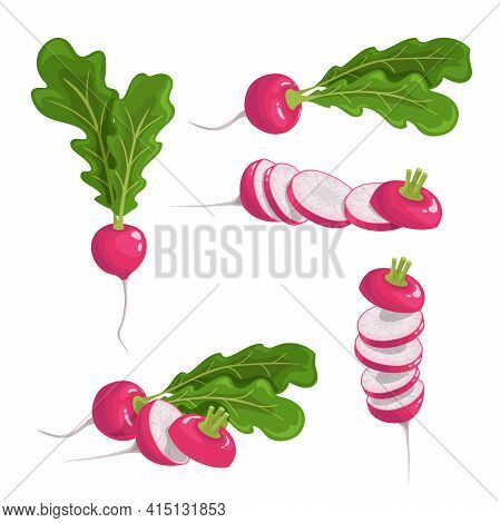 Red Radish Set. Fresh Farm Vegetables Collection. Whole Single, Group And Sliced Roots. Vector Veget