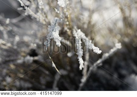 Nature Winter Background. Winter Landscape. Grass Covered With Frost And Snow Drifts Close-up. Beaut