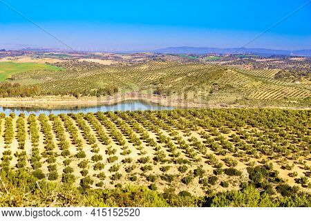 Spanish Nature Landscape. Embalse Del Guadalhorce And Surrounding Countryside With Olives Trees. Ard