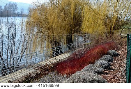 Waterfront With A Bike Path Over The River. Old Weeping Willow Bends The Branches Above The Water. O