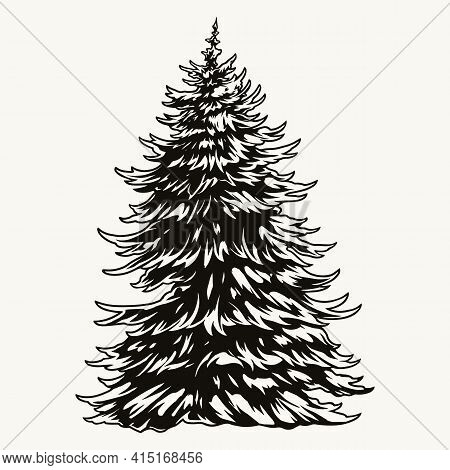 Lush Fir Tree Vintage Concept In Black And White Colors Isolated Vector Illustration