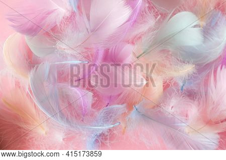 Multi-colored Feathers Of A Bird Of Pastel Shades On A Light Background Selective Focus