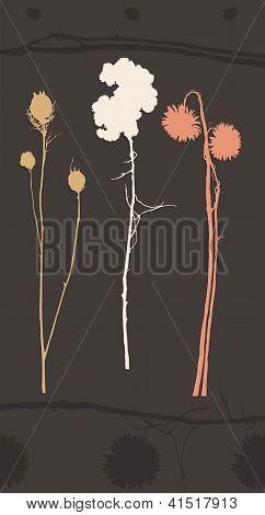 Dried Flower Design Elements