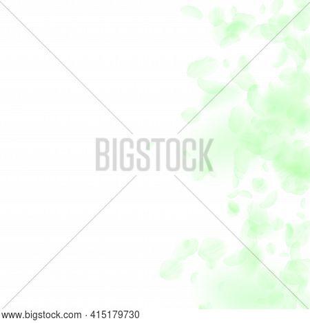 Green Flower Petals Falling Down. Extraordinary Ro