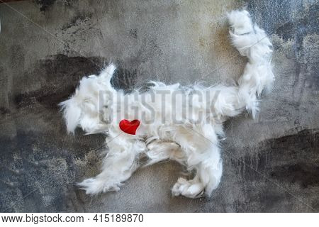 White Coat Is Laid Out In Shape Of Cat On Concrete Table. Concept Of Pet Grooming, Allergies. Bunch