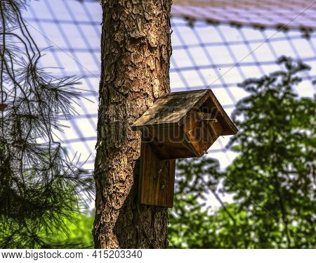 Cozy Wooden House With A Triangular Exit Hole, A Triangular Roof For Small Birds Fixed To The Trunk