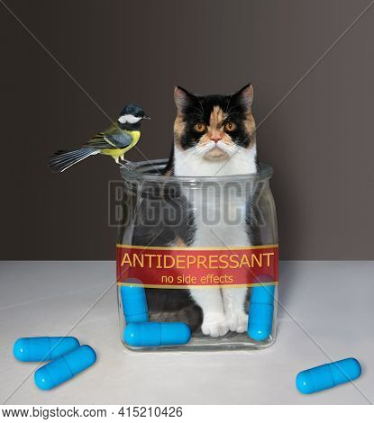A Color Cat Is Inside A Medical Glass Jar With A Inscription Antidepressant. There Are Some Blue Pil