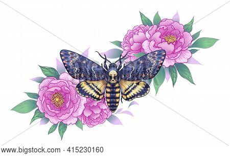 Hand Drawn Acherontia Styx Butterfly And Pink Peony Flowers On White. Colored Elegant Floral Composi