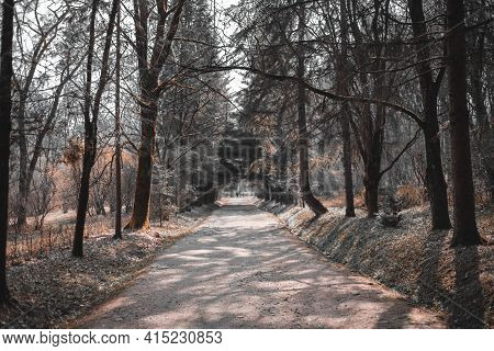 Beautiful Alley In Park. Pathway Way Through Dark Forest. Walkway Lane Path With Green Trees In Fore