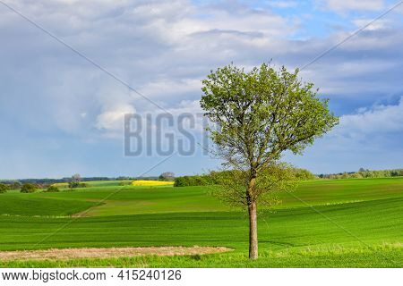 Spring ecological landscape with a tree and green fields