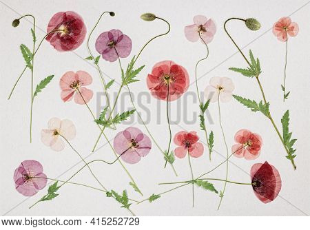 Page From An Old Photo Album. Flowers Poppy. Scrapbooking Element Decorated With Leaves, Flowers And