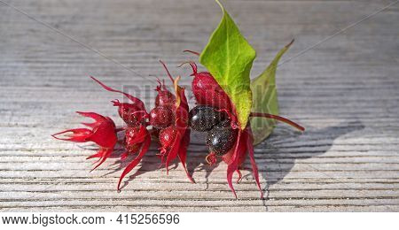 Himalayan Honeysuckle  Purple-black Berries With Green Leaves Isolated On Wood Background Close Up.