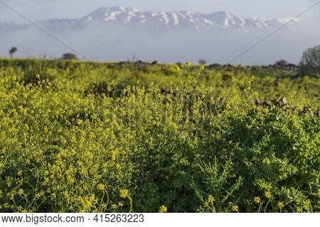 A Field Of Blooming Flowers With A Mountain On The Horizon