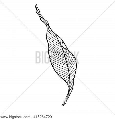 Banana Leaf. Tropical Leaf. Vector Illustration Banana Leaves Isolated On White Background.