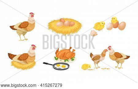 Hen Sitting On Eggs And Brown Hen Eggs Rested In Hay Nest Vector Set