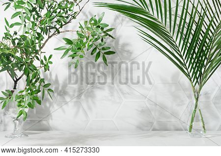 Elegant Summer Tropical Background - Green Leaves Palm And Tree In Vases With Dappled Shadow In Suns