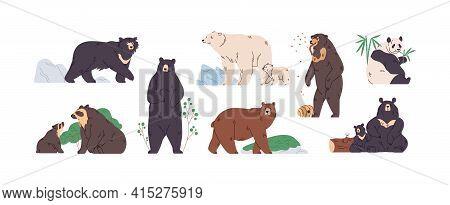 Set Of Brown, Polar, Black, Himalayan, Malay, Spectacled, Honey, Sloth Bear And Panda. Animals In Di