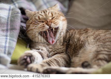 yawning cat on cosy sofa
