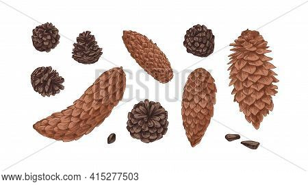 Hand-drawn Set With Different Cones Of Coniferous Fir, Spruce And Pine Trees Isolated On White Backg