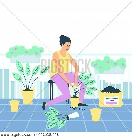 A Woman Transplants Spathiphyllum Flowers On Her Balcony. Hobby For Women Of All Ages. Plants On The