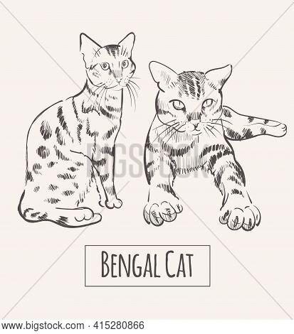 Bengal Cat Hand Drawn Sketch Illustration Animal