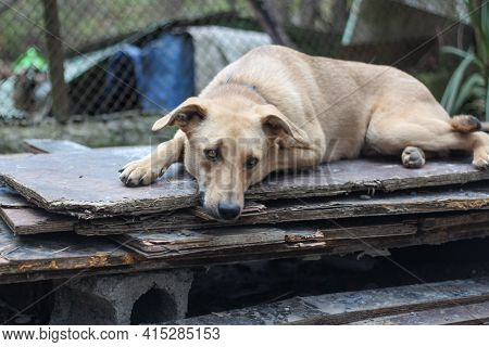 A Cute Stray Dog With Sad Eyes Lying In The Cage Of A Dog Shelter, Waiting For Adoption. Horizontal