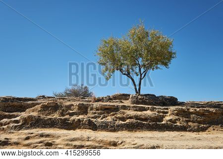 Ancient Stones, Landscape With Olive Tree. Valley Of The Temples, Agrigento, Sicily, Italy.