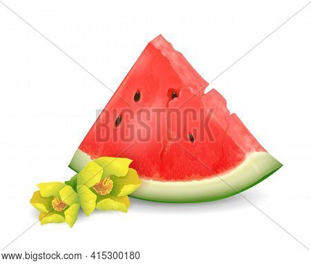 Watermelon Fruit - Exotic Fruits Collection, Realistic Design Vector Illustration Close-up
