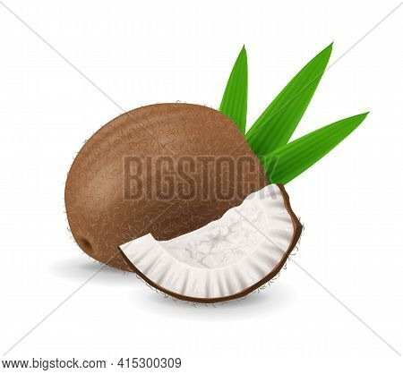 Coconut Fruit - Exotic Fruits Collection, Realistic Design Vector Illustration Close-up