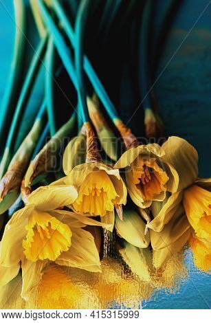 Top View Of Daffodils And Buds In Dark Lighting. Close-up Of Flowers Daffodils On A Reflective Surfa