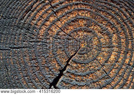 Selective Focus Burnt Resinous Wood Glowing Texture Of Rough Surface Felled Tree Weathered With Annu