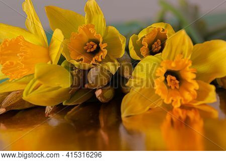 Close-up Of Yellow Daffodils Buds In Dark Lighting. Flowers Daffodils On A Reflective Surface. Blurr
