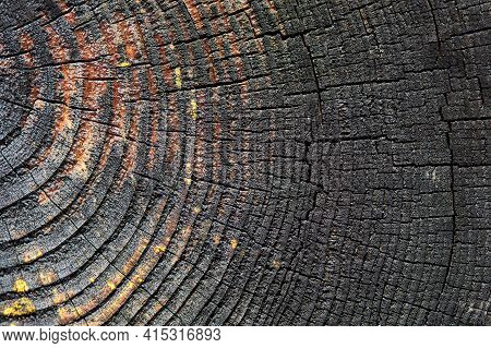 Burnt Resinous Wood Glowing Texture Selective Focus Of Rough Surface Felled Tree Weathered With Annu