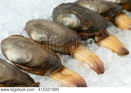 Fresh raw alive soft shell clams, an edible saltwater clam, on ice in a row