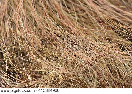 Bronze New Zealand Hair Sedge - Latin Name - Carex Comans Bronze Form
